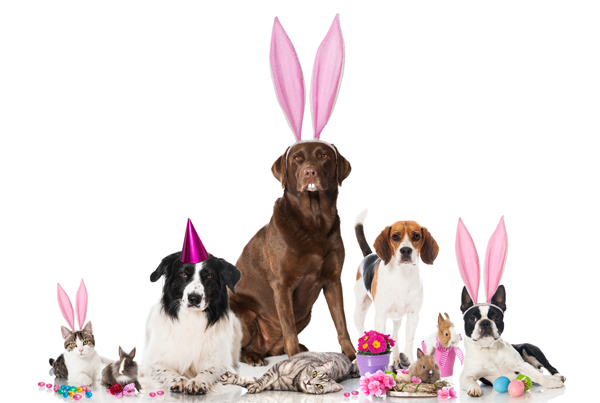 Easter themed pets