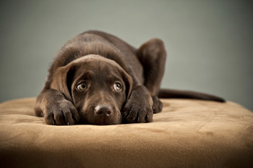 3 simple steps to keep your pet heartworm free